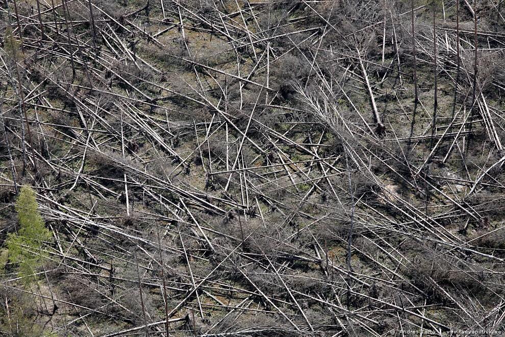Tormimurd ja tikud maas