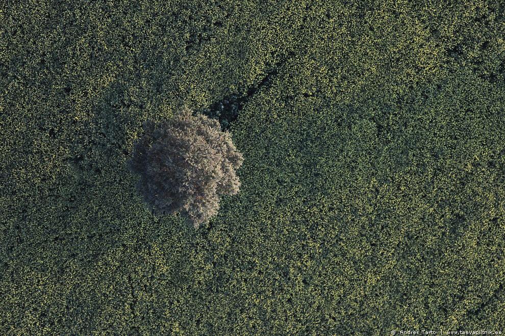 Puu põllul, pall vaibal